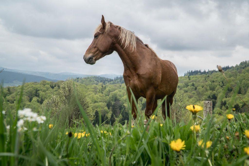 Лошади – грациозные, мощные, умные, преданные животные.